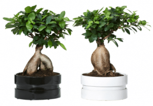 bonsai ikea