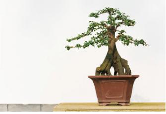 vaso per bonsai