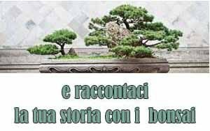 collabora con hobby bonsai