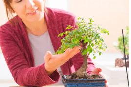 diventare un esperto di bonsai